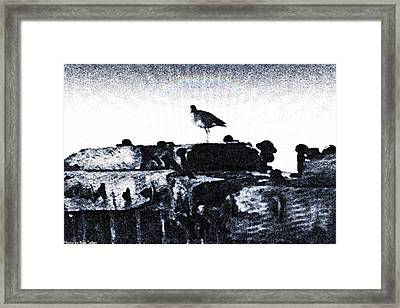 The Jetty Bird Framed Print by Ronald Talley
