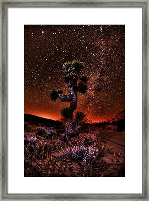The Joshua Tree At Night Framed Print by Shane Lund