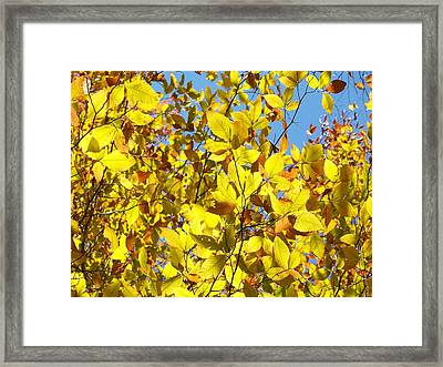 The Joy Of Autumn Framed Print