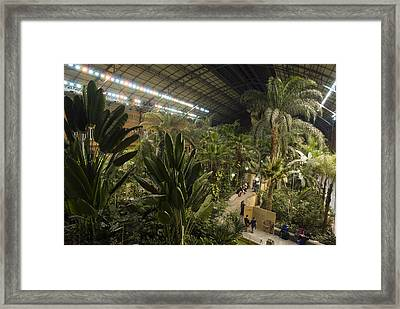 The Jungle Inside Of The Old Section Framed Print by Krista Rossow
