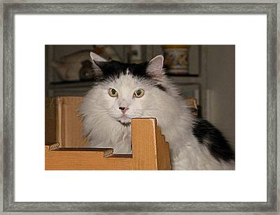 The Keeper Of The Chair Framed Print by Inga Smith