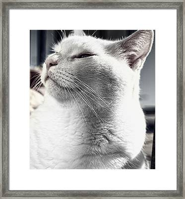 The King Framed Print by Gabriel Calahorra