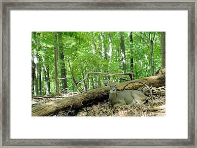 The King Rests Framed Print by