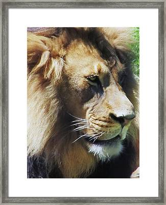 The King Framed Print by Todd Sherlock