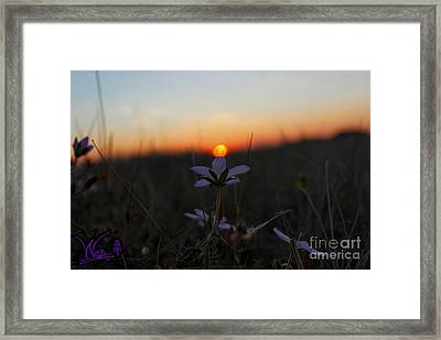 The Kiss Of Dawn Framed Print by Wesley Hahn