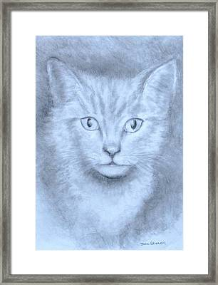 The Kitten Framed Print by Jack Skinner