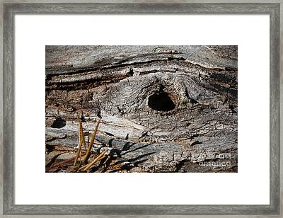 Framed Print featuring the photograph The Knot by Todd Blanchard