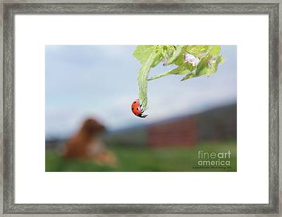 The Lady Bug No.1 Framed Print by Laurinda Bowling