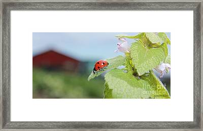 The Lady Bug  No.2 Framed Print by Laurinda Bowling