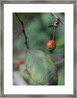 The Last Berry Framed Print by Beverly Hammond
