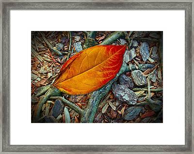 The Last Leaf Framed Print by Barbara Middleton
