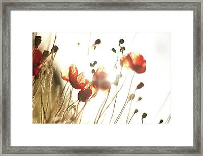The Last Poppies Of Summer 2 Framed Print