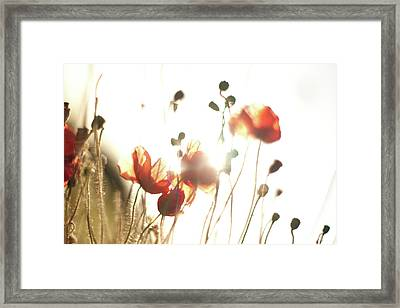 The Last Poppies Of Summer 3 Framed Print
