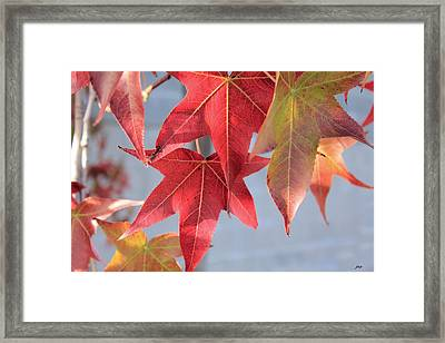 The Leaves Framed Print