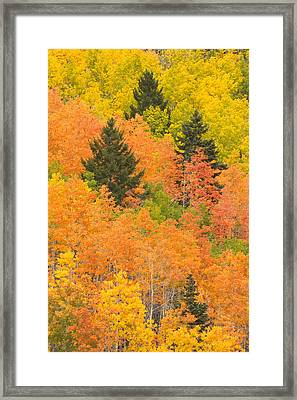 The Leaves Of A Forest Change Colors Framed Print