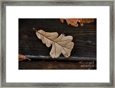 The Leaves Framed Print by Tamera James
