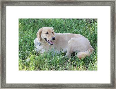 The Life Of A Dog Framed Print