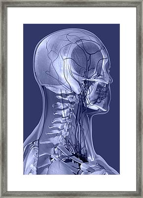 The Ligaments And Blood Vessels Of The Head And Neck Framed Print by MedicalRF.com