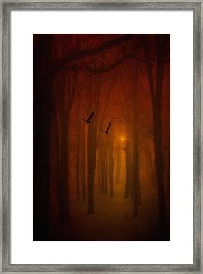 The Light In The Forest Framed Print by Tom York Images