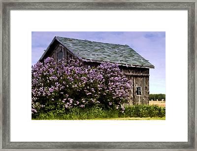 The Lilac Barn Framed Print by Cheryl Cencich