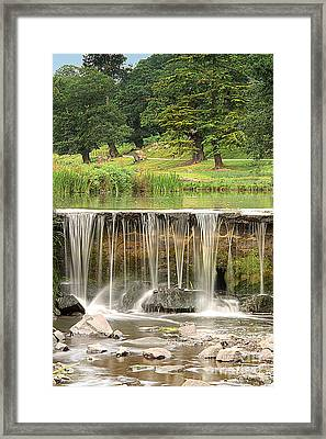 The Lin Framed Print by Linsey Williams