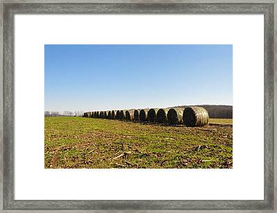 The Line Up Framed Print by Bill Cannon