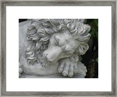 The Lion Sleeps Tonite Framed Print by Judyann Matthews