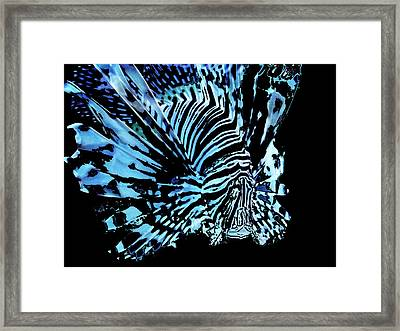 The Lionfish 2 Framed Print by Robin Hewitt