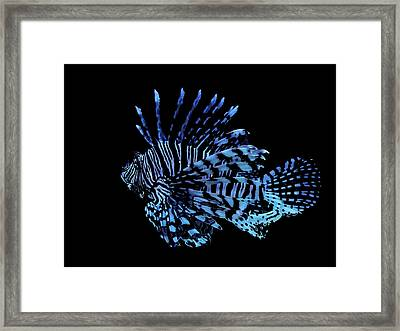 The Lionfish 3 Framed Print by Robin Cox