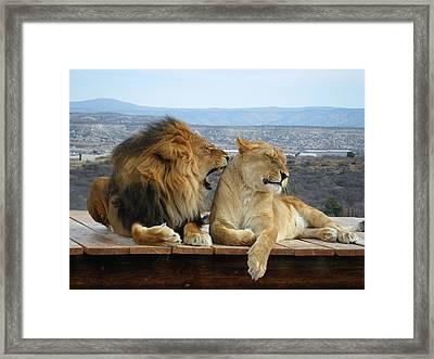 The Lions Framed Print by Olga Vlasenko
