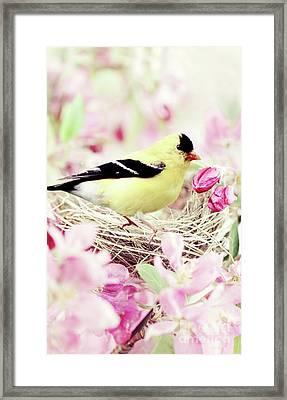 The Little Finch Framed Print by Stephanie Frey