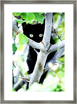 Framed Print featuring the photograph The Little Huntress by Jessica Shelton