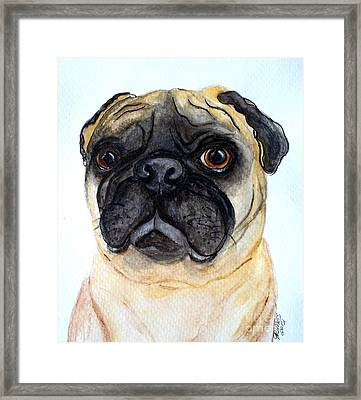 The Little Pug Framed Print