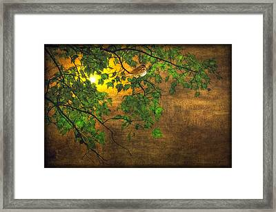 The Little Sparrow In The Tree Framed Print