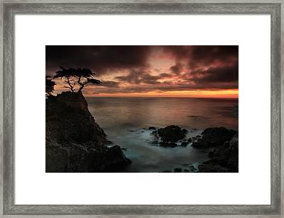 The Lone Cypress Observes A Pebble Beach Sunset Framed Print by Dave Sribnik