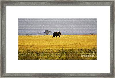 The Lone Elephant Framed Print by Pravine Chester