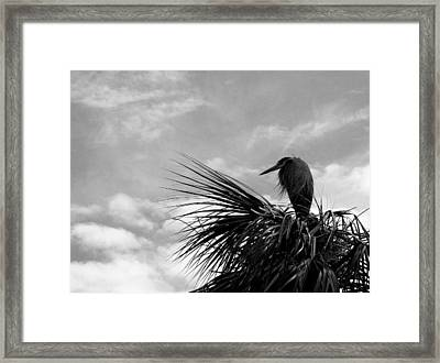 The Lonely Great Blue Heron Framed Print