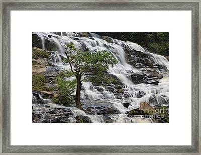 The Lonesome Pine. Framed Print by Pete Reynolds