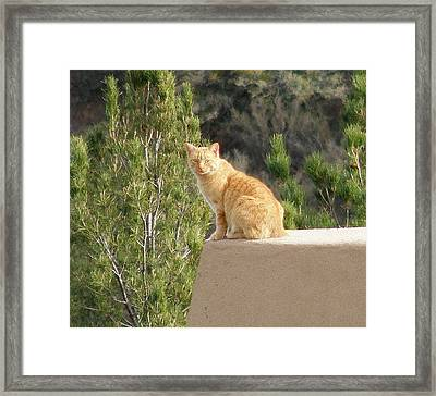 The Lookout Framed Print by FeVa  Fotos