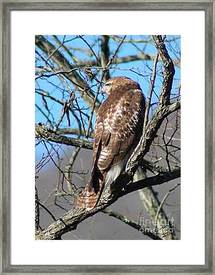 The Lookout Framed Print by Laurinda Bowling
