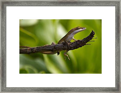 Framed Print featuring the photograph The Lookout by Roger Mullenhour