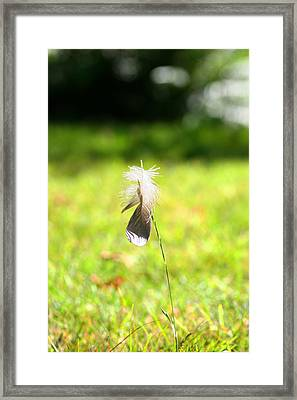 Framed Print featuring the photograph The Lost Feather by JM Photography
