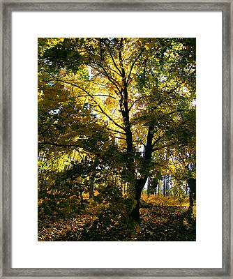 The Luminous Tree Framed Print by Mimulux patricia no No