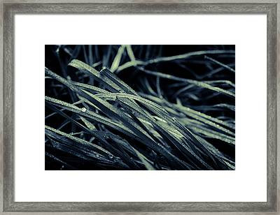 The Lying Grass Framed Print by Andreas Levi