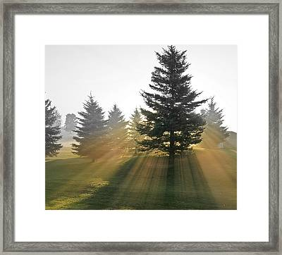 Framed Print featuring the photograph The Magic Of The Morning Light by Nick Mares
