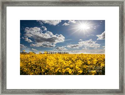 The Magic Of The Summer Framed Print by Radoslav Toth