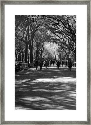 The Mall At Central Park Framed Print by Rob Hans
