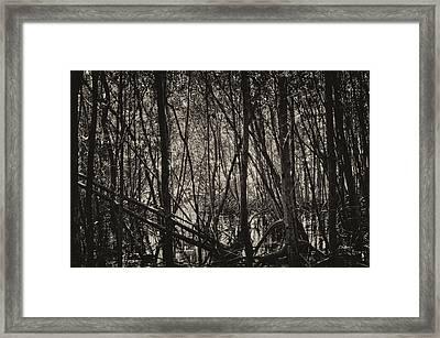 The Mangrove Framed Print