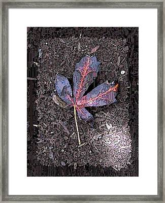 The Maple 5 Framed Print by Tim Allen