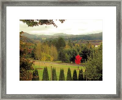 Framed Print featuring the photograph The Maple by Katie Wing Vigil